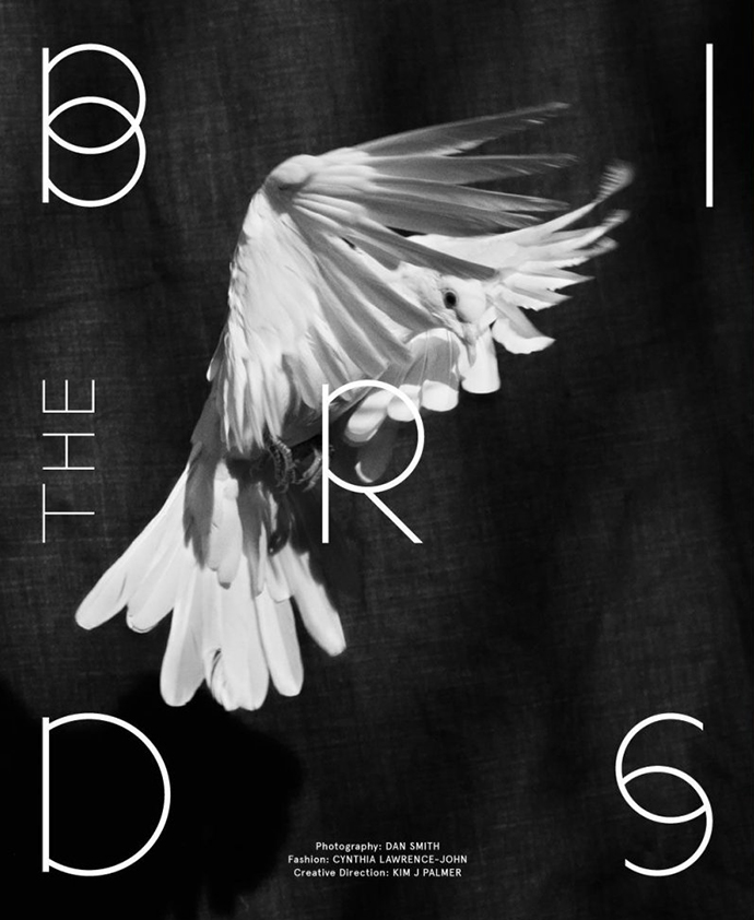 the-birds-01a