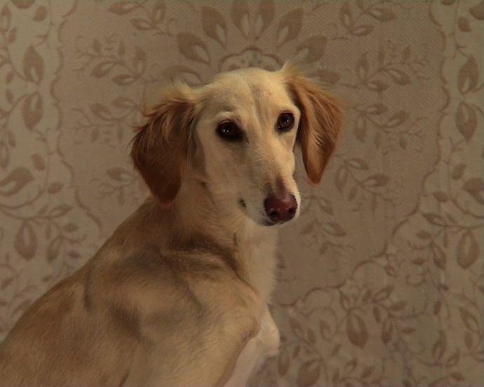 Dogs' Ears © Julie Freeman