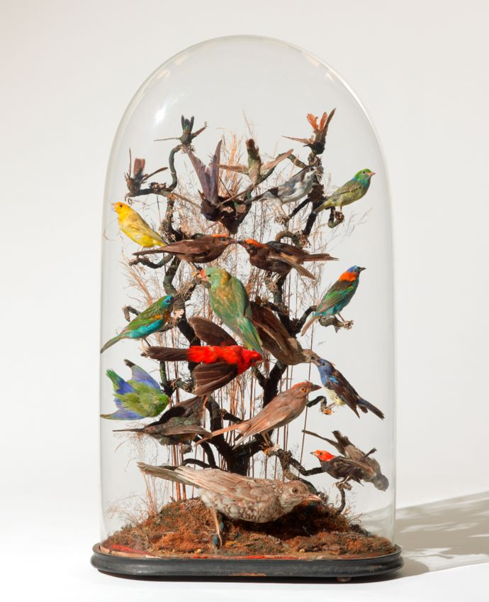 Collection Damien Hirst. Unknown maker, Montage display of 24 tropical birds, mid-19th century Courtesy Murderme Collection